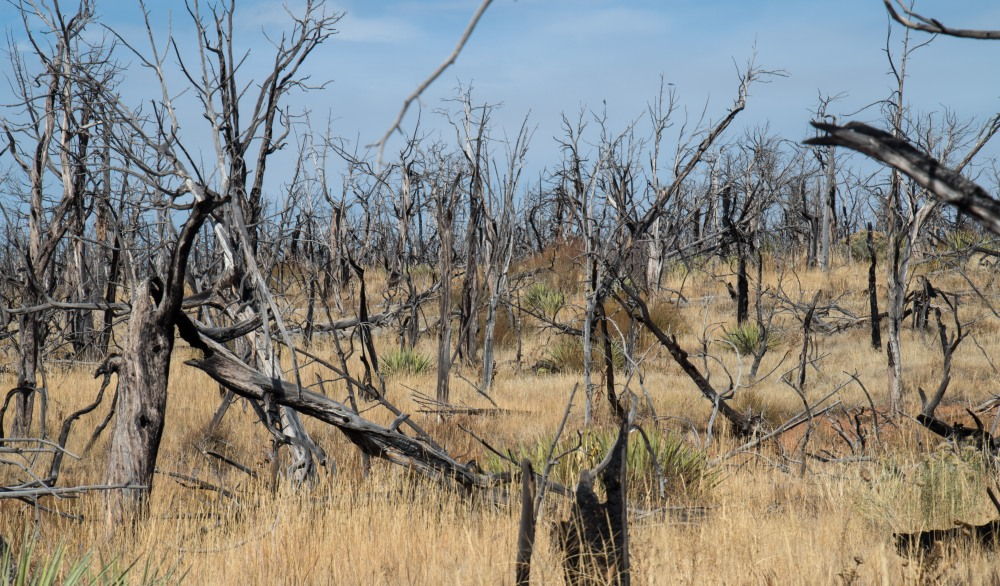 Results of one of the many fires that plague Mesa Verde
