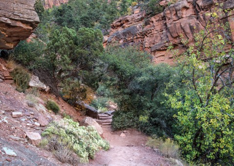 2017 Oct. Zion day 2 & Wildcat Canyon_10 05 17_4306_edited-1