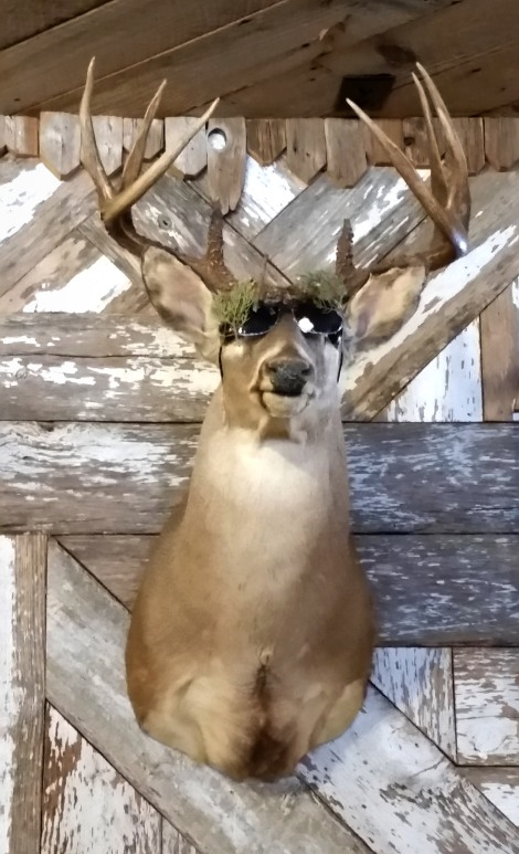 Yes, the deer is wearing sun glasses