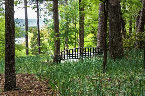 2018 April Hot Springs & Garvan Woodland Gardens_04 21 18_6265_edited-1