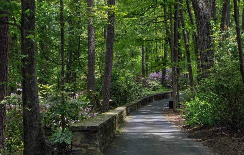 2018 April Hot Springs & Garvan Woodland Gardens_04 21 18_6274_edited-1